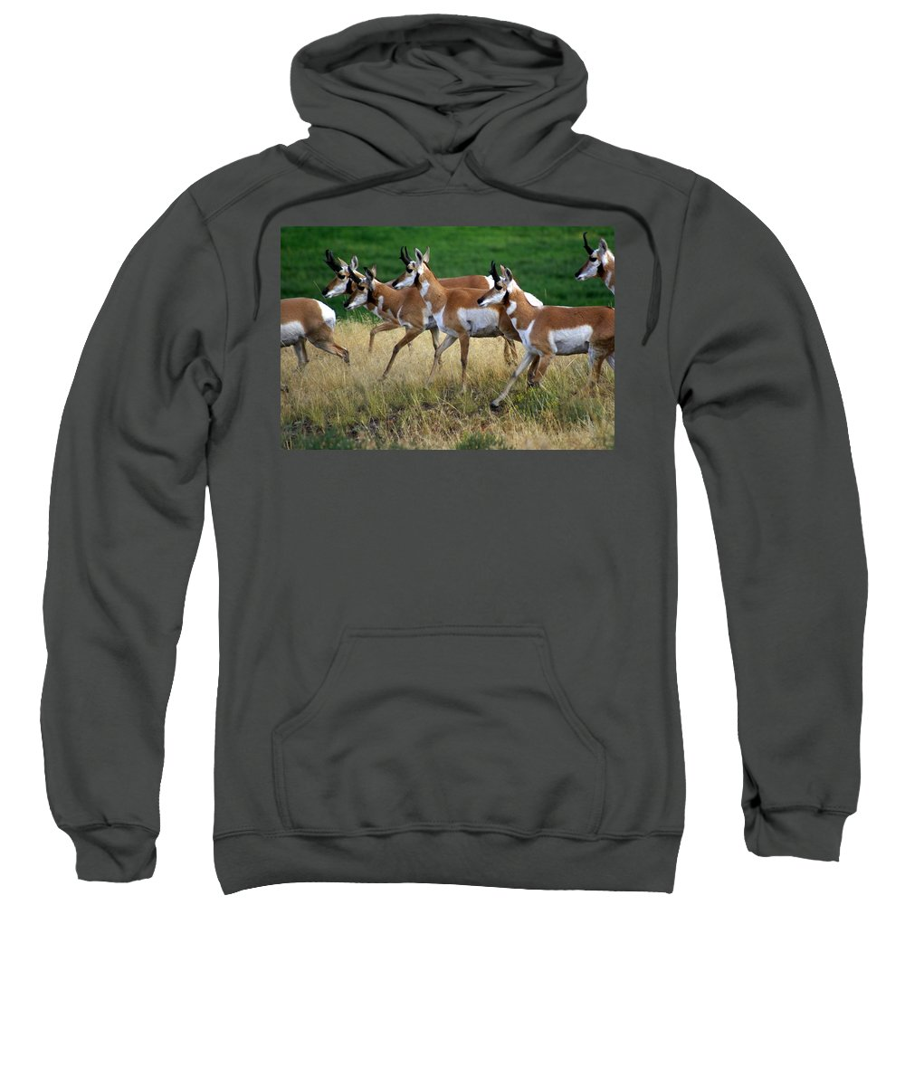 Wildlife Sweatshirt featuring the photograph Antelope 1 by Marty Koch