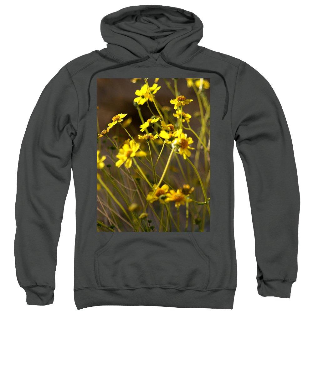 Desert Sunflower Sweatshirt featuring the photograph Anza Borrego Desert Sunflowers 1 by Chris Brannen