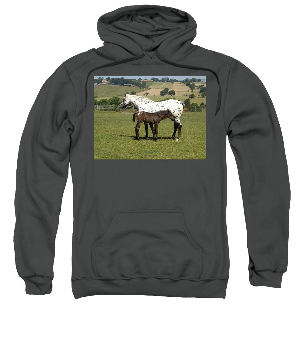 Horse Sweatshirt featuring the photograph Appaloosa Mare And Foal by Susan Baker