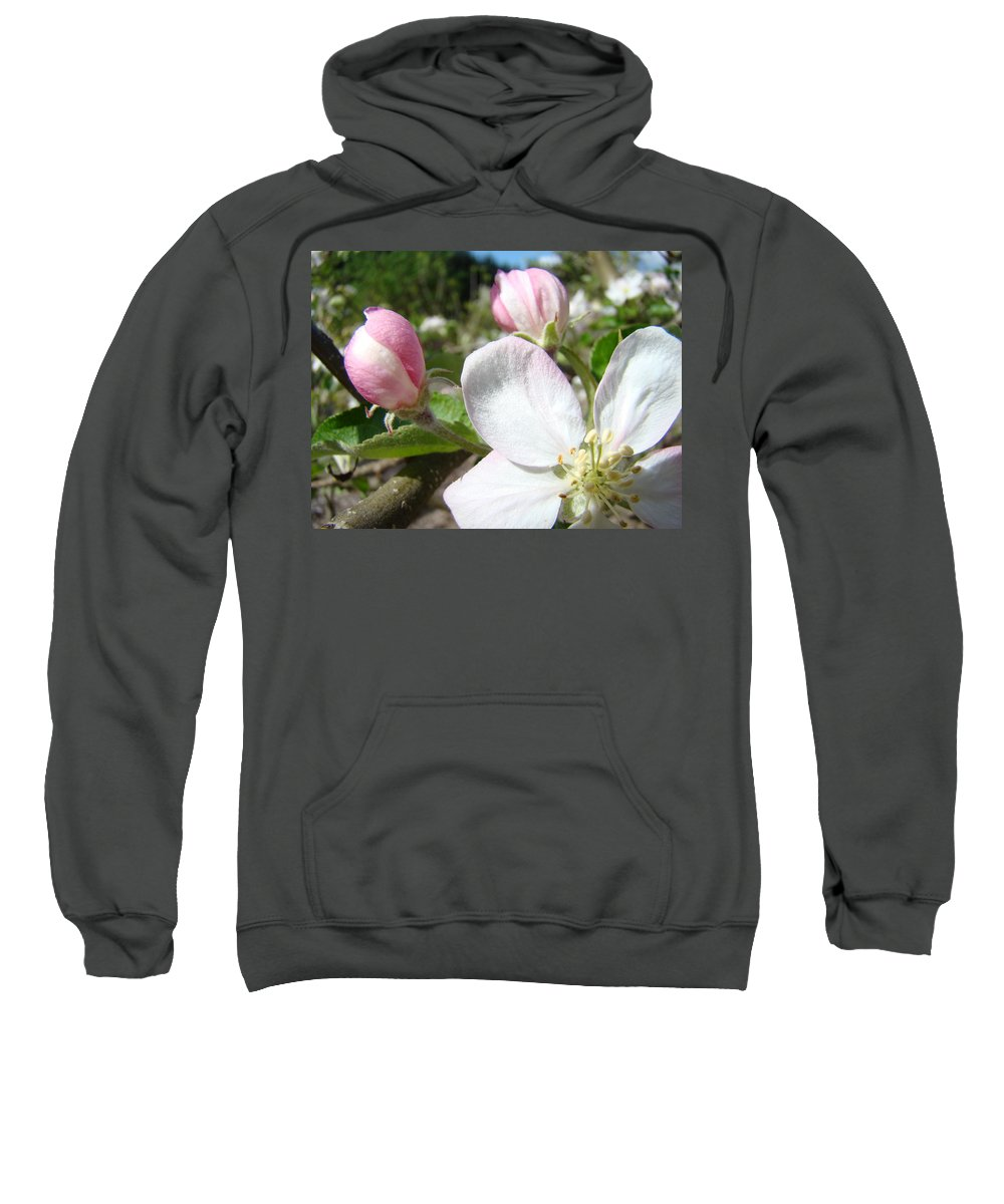 Apple Sweatshirt featuring the photograph Apple Blossom Artwork Spring Apple Tree Baslee Troutman by Baslee Troutman