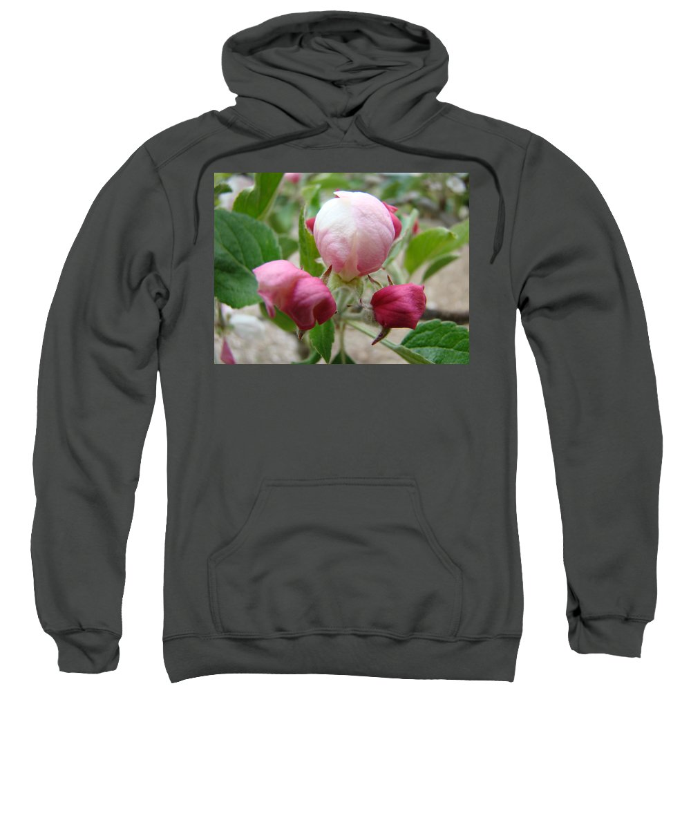 Apple Sweatshirt featuring the photograph Apple Blossom Buds Art Prints Spring Baslee Troutman by Baslee Troutman