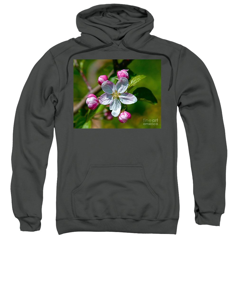 Flower Sweatshirt featuring the photograph Apple Blossom by Robert Pearson
