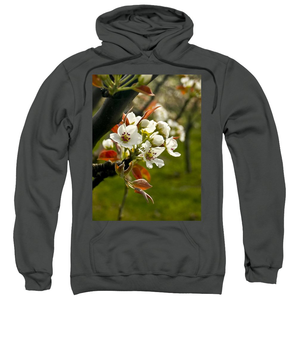 Flowers Sweatshirt featuring the photograph Apple Blossoms by Albert Seger