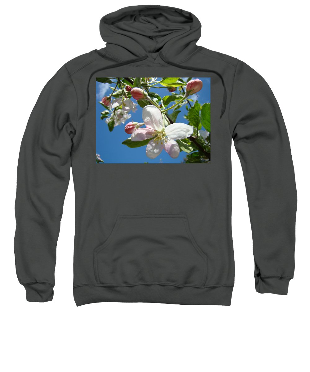 Apple Sweatshirt featuring the photograph Apple Blossoms Art Prints Spring Apple Blossoms Baslee Troutman by Baslee Troutman