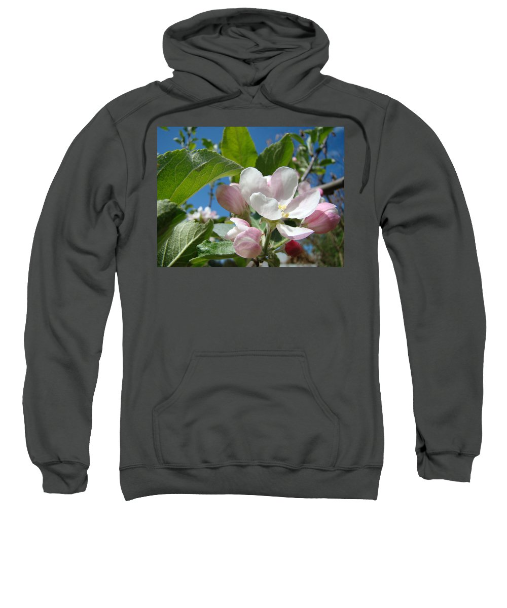 Apple Sweatshirt featuring the photograph Apple Blossoms Art Prints Spring Apple Tree Baslee Troutman by Baslee Troutman