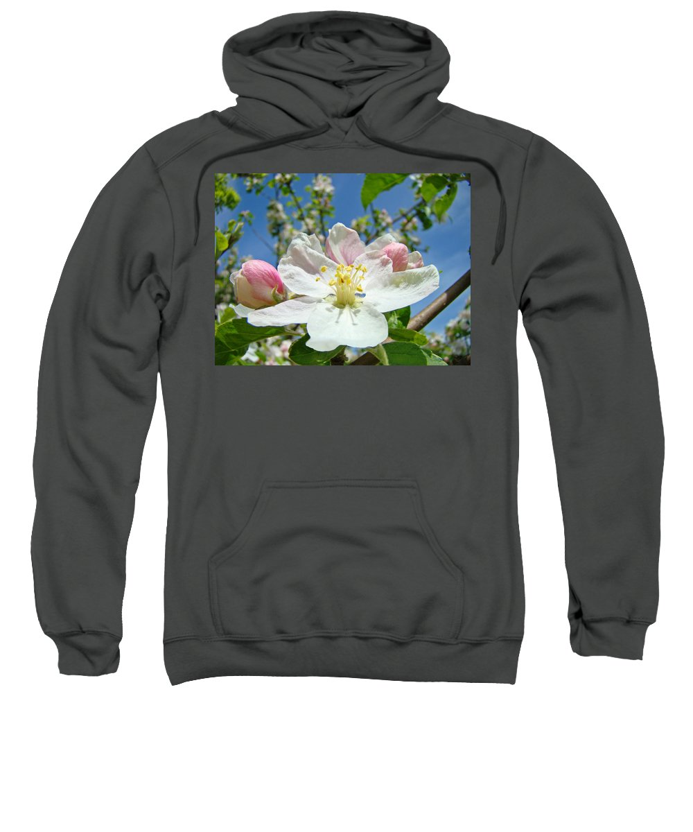 Blossom Sweatshirt featuring the photograph Apple Tree Blossom Art Prints Springtime Nature Baslee Troutman by Baslee Troutman