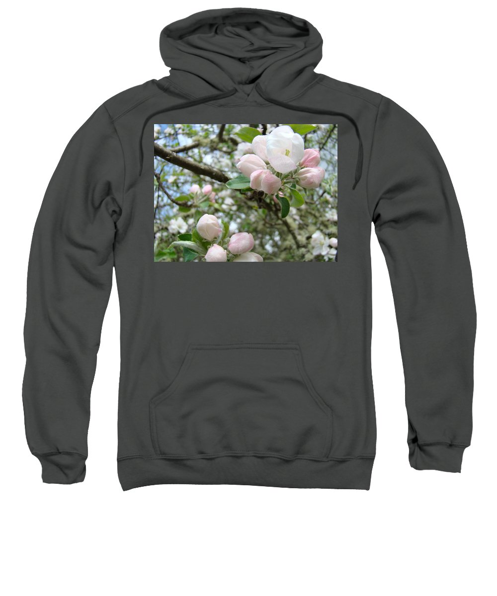 Apple Sweatshirt featuring the photograph Apple Tree Blossoms Art Prints Apple Blossom Buds Baslee Troutman by Baslee Troutman