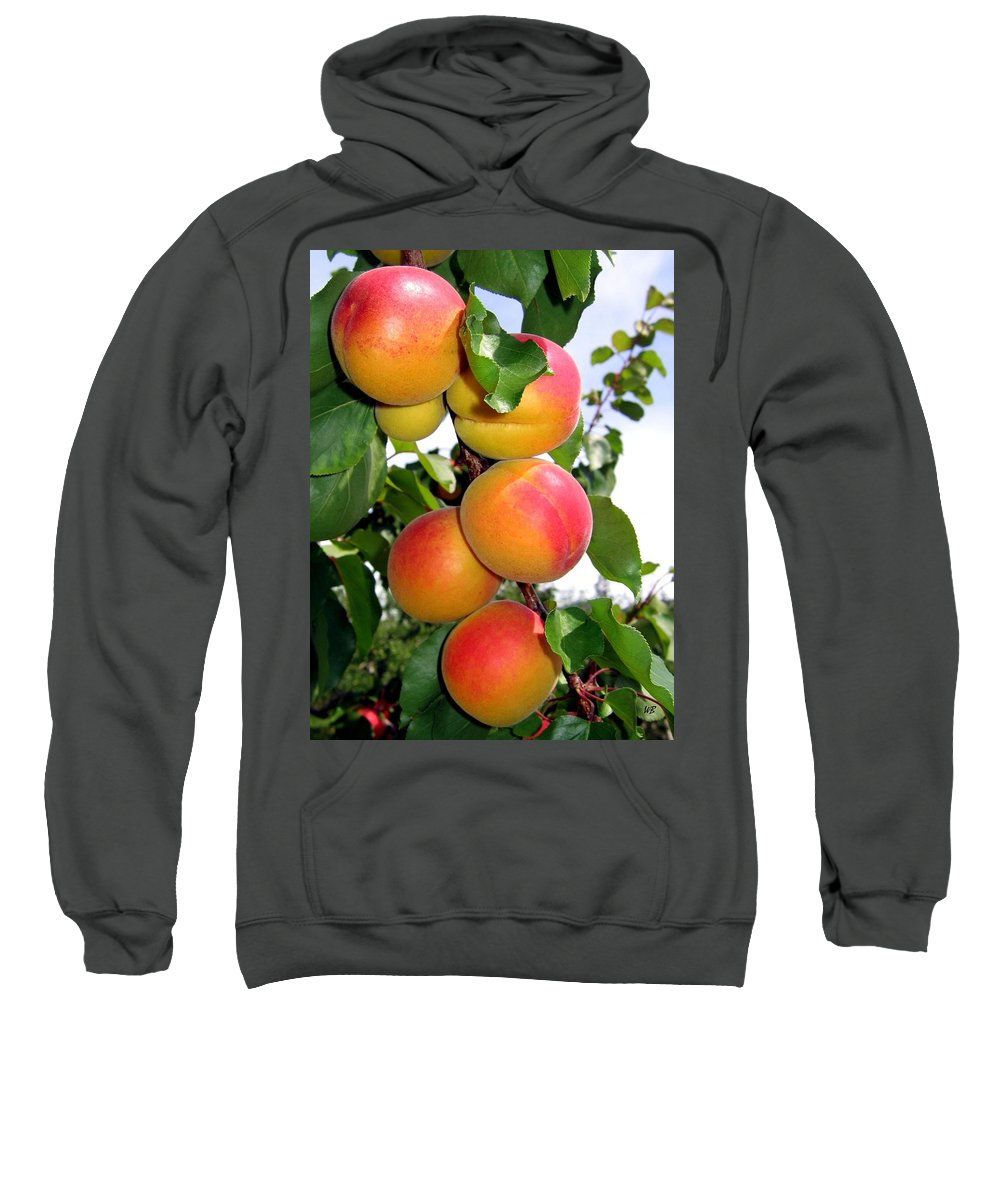 Apricots Sweatshirt featuring the photograph Apricots by Will Borden