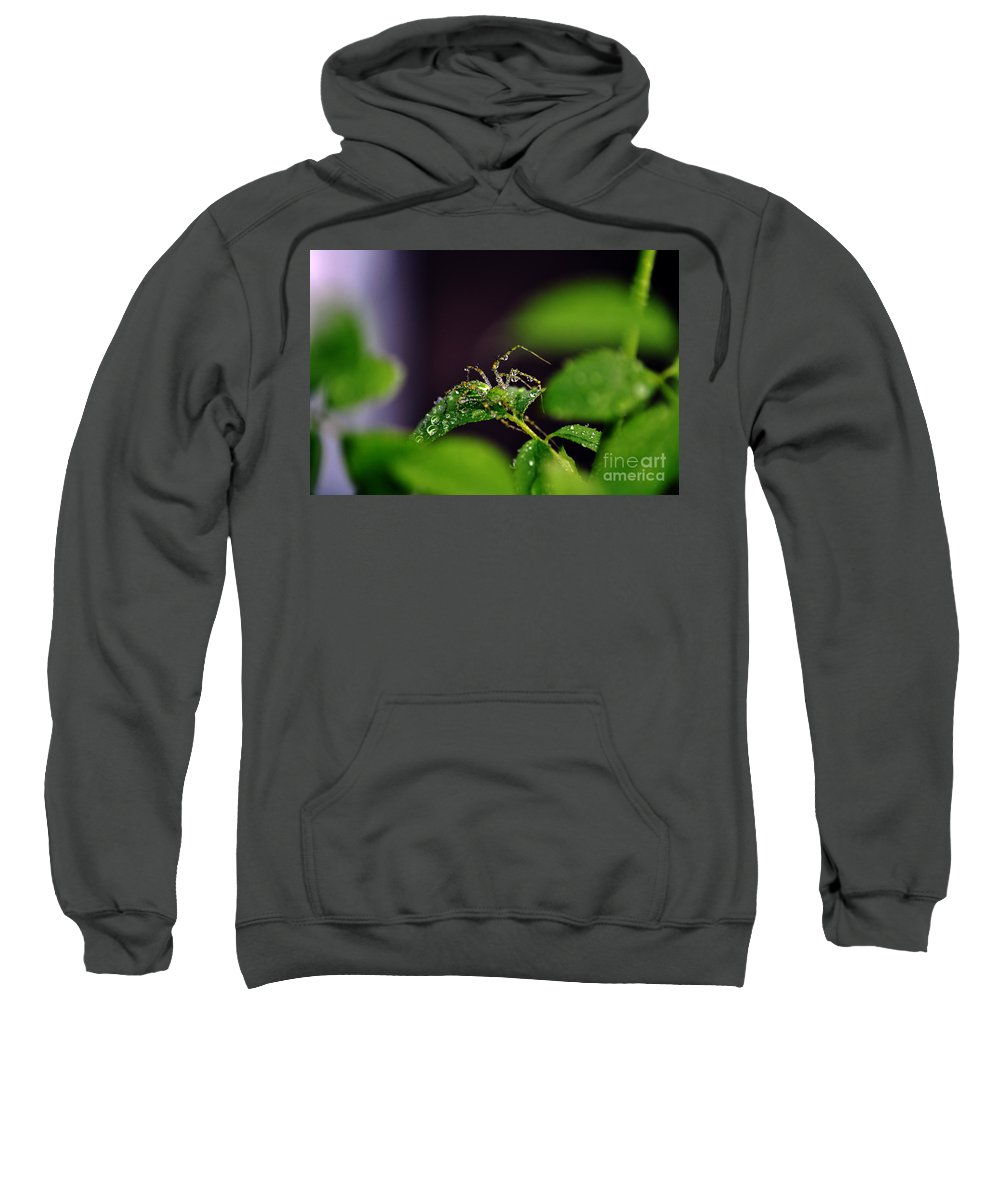 Clay Sweatshirt featuring the photograph Arachnishower by Clayton Bruster
