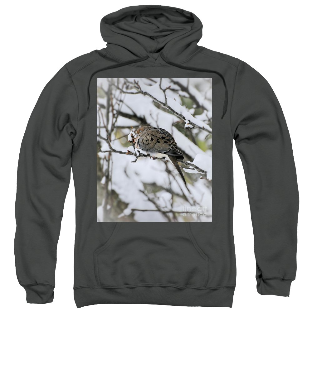 Dove Sweatshirt featuring the photograph Asleep In The Snow - Mourning Dove Portrait by Kerri Farley