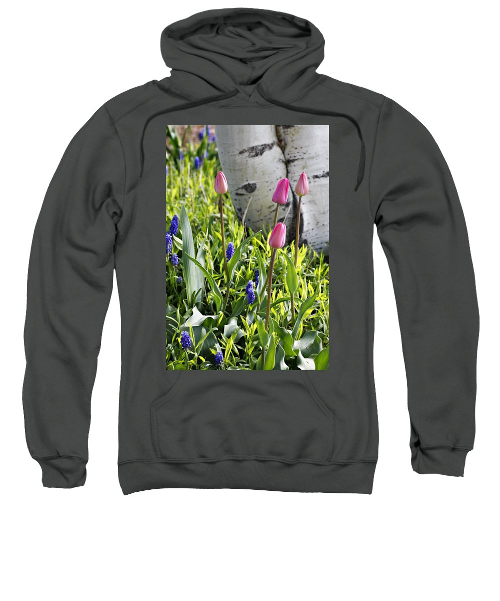 Aspen Sweatshirt featuring the photograph Aspen And Tulips by Marilyn Hunt