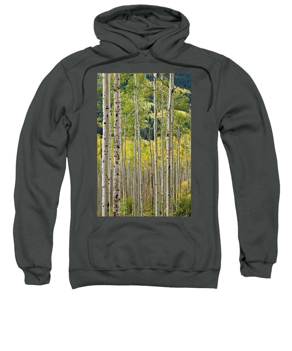 Trees Sweatshirt featuring the photograph Aspen Stand by Robert VanDerWal