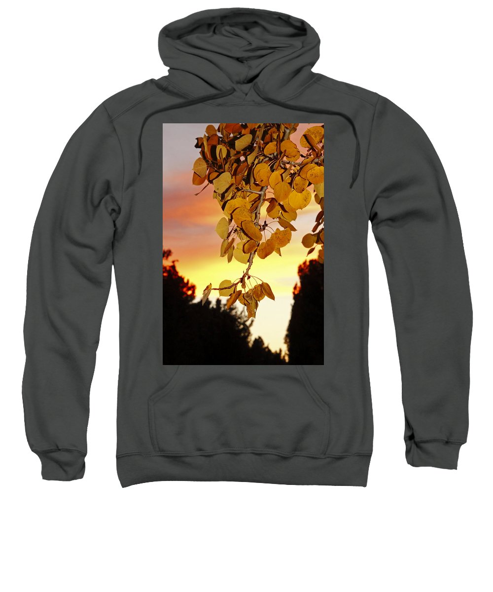 Aspens Sweatshirt featuring the photograph Aspens At Sunset by Diane Zucker