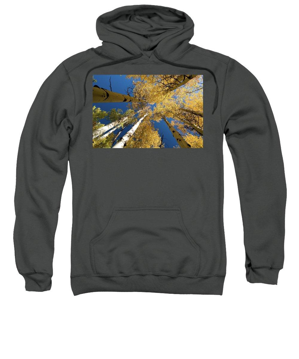 Grand Teton Sweatshirt featuring the photograph Aspens Up by Steve Stuller