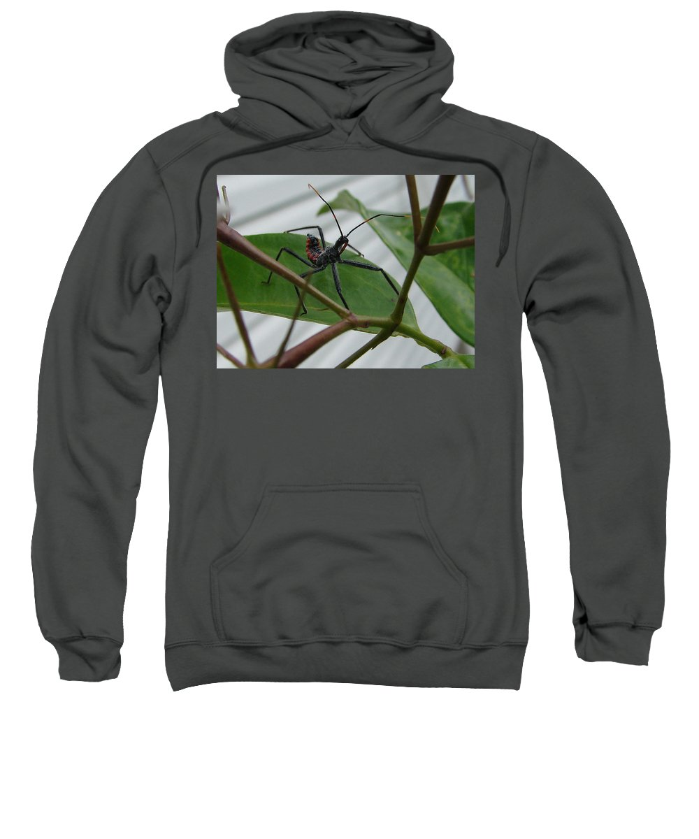 Insect Red Black Green Leaf Sweatshirt featuring the photograph Assassin Bug by Luciana Seymour