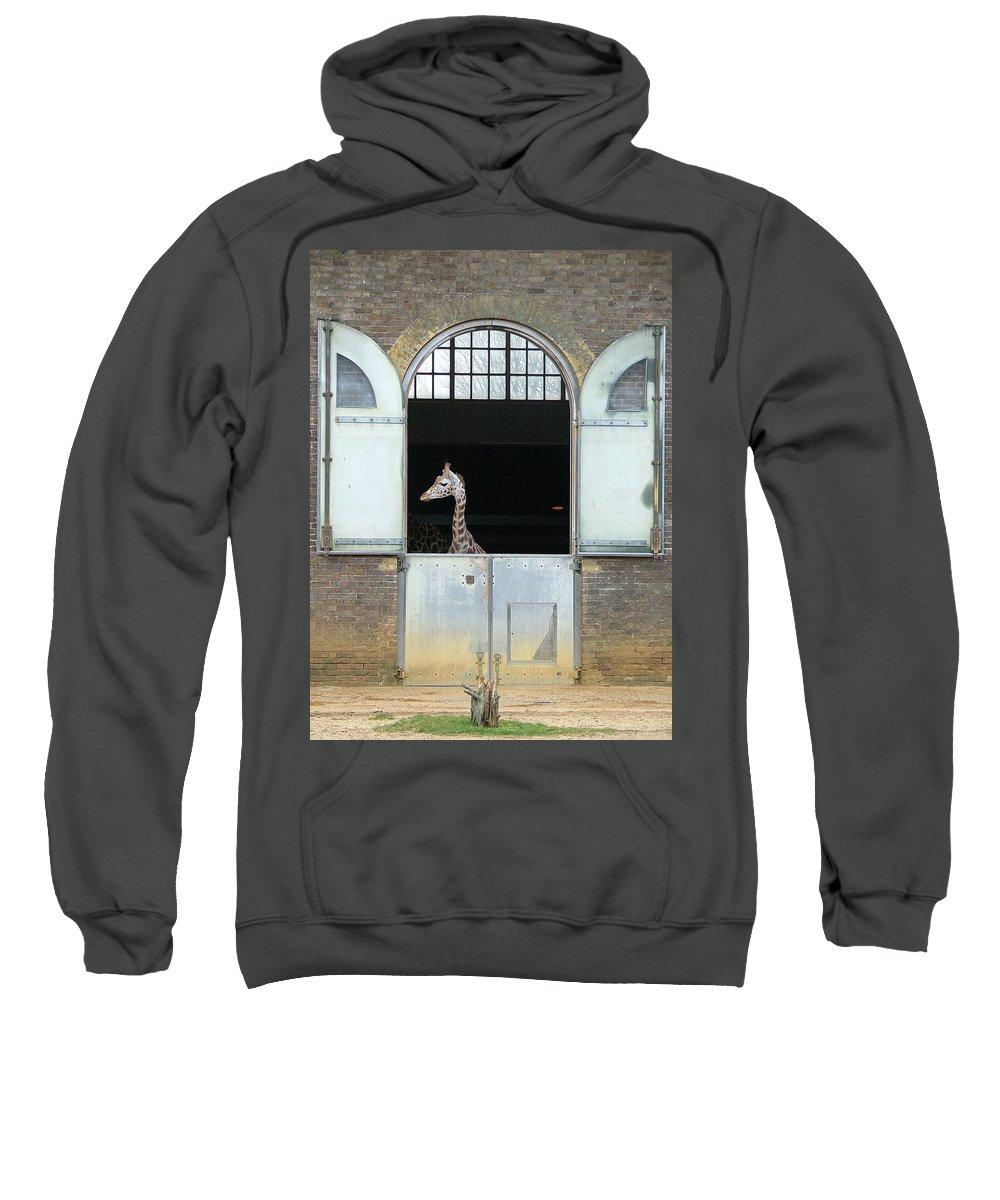 Giraffe Sweatshirt featuring the photograph Asymmetrical Giraffe by Heather Lennox