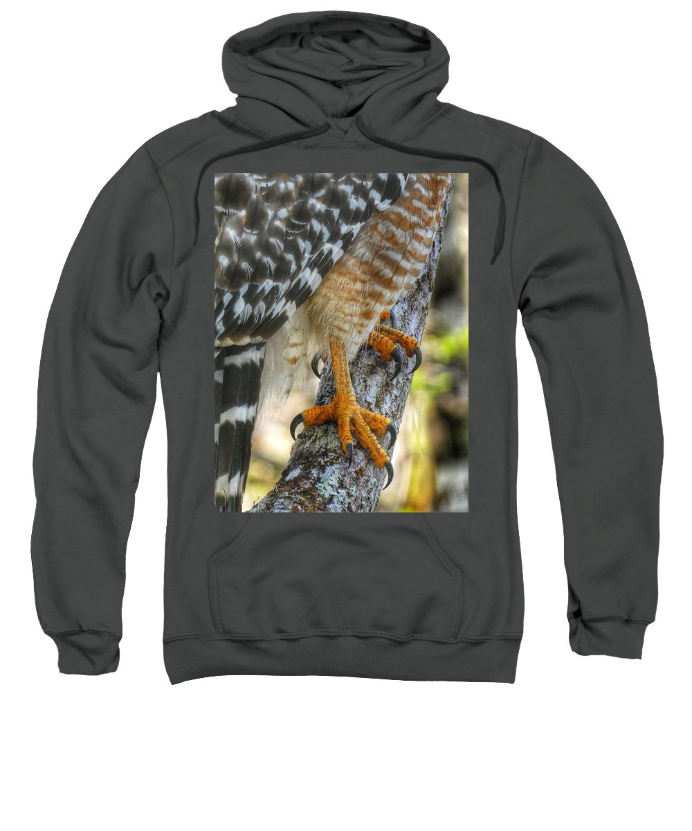 Alligators Sweatshirt featuring the photograph Attention To Detail I by Kathi Isserman