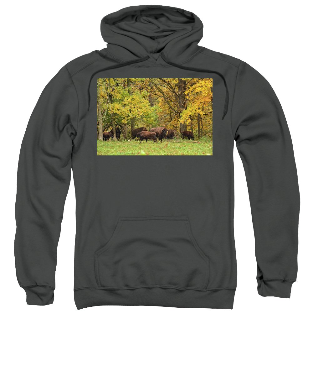 Bison Sweatshirt featuring the photograph Autumn Bison by Bonfire Photography