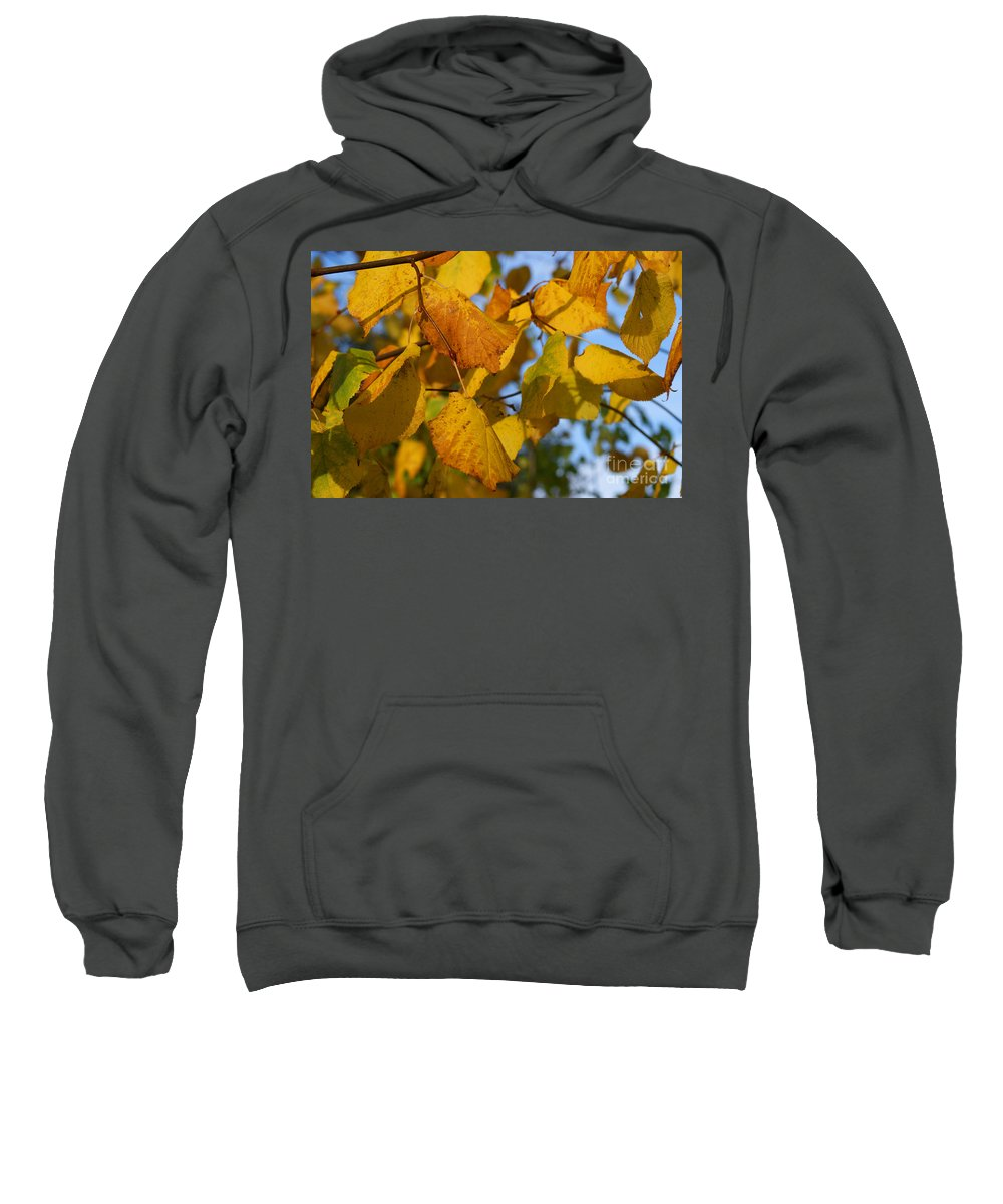 Autumn Sweatshirt featuring the photograph Autumn by Carol Lynch