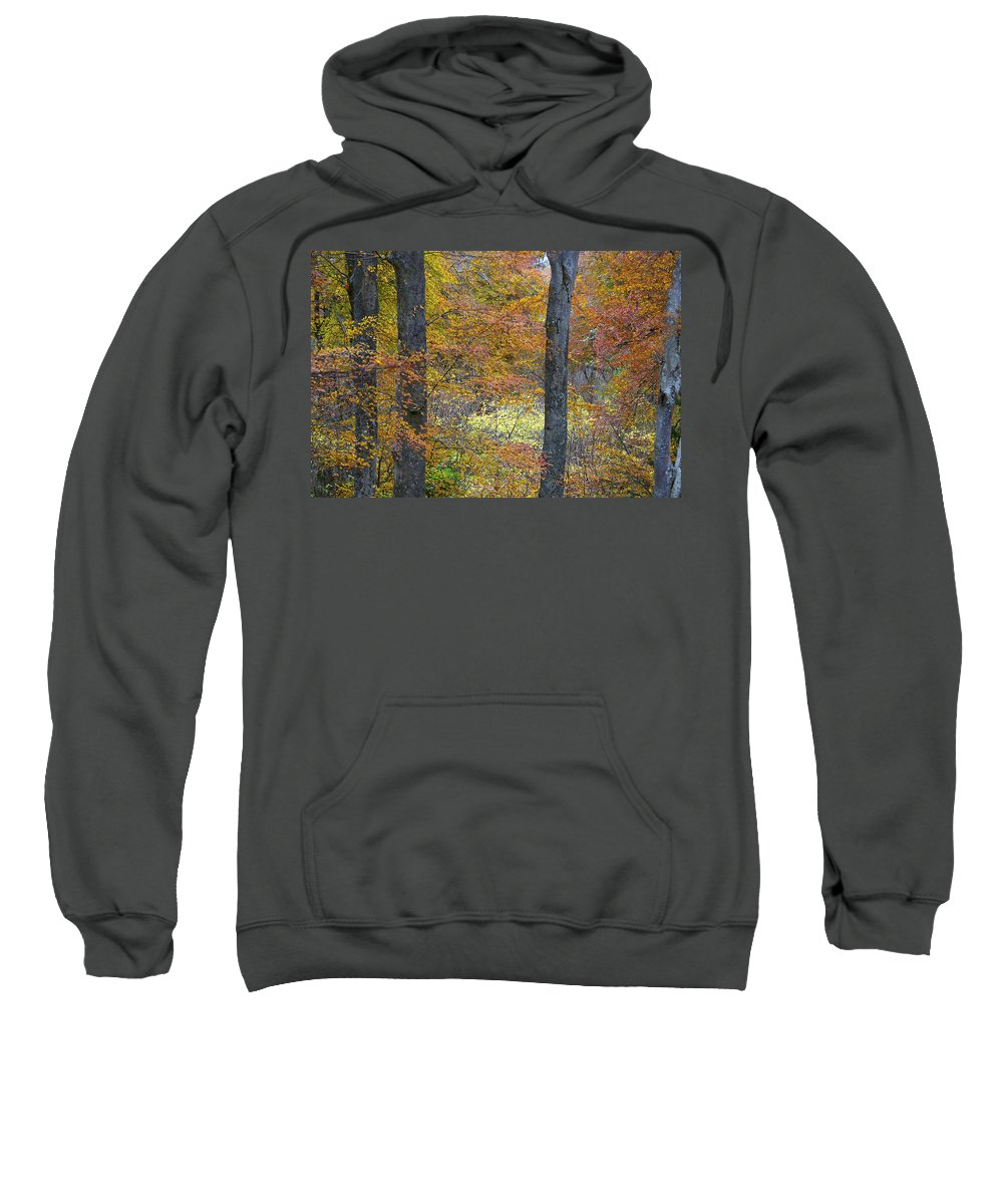 Fall Sweatshirt featuring the photograph Autumn Colours by Phil Crean
