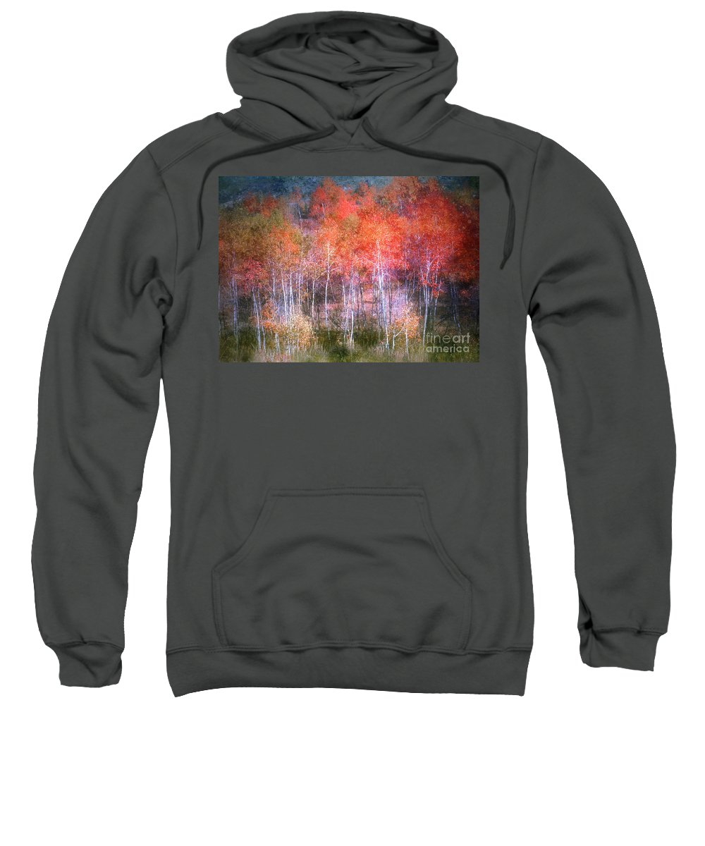 Trees Sweatshirt featuring the photograph Autumn Forest by Tara Turner