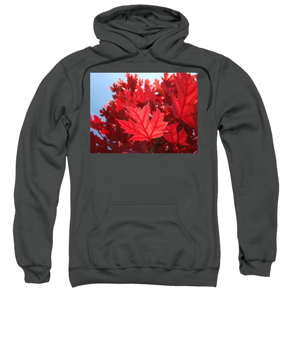 Autumn Sweatshirt featuring the photograph Autumn Leaves Fall Art Bright Red Leaves Baslee Troutman by Baslee Troutman
