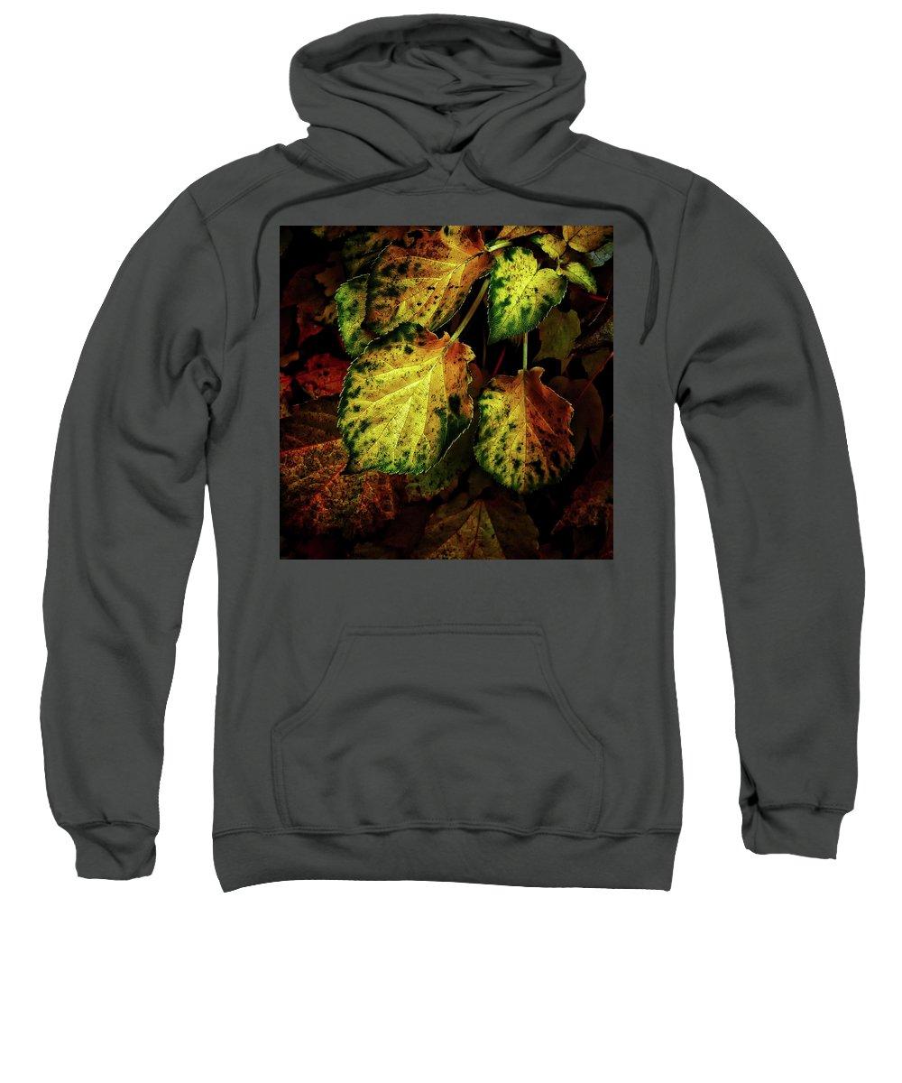 Hdr Sweatshirt featuring the photograph Autumn Motif by Lobostudio Hamburg