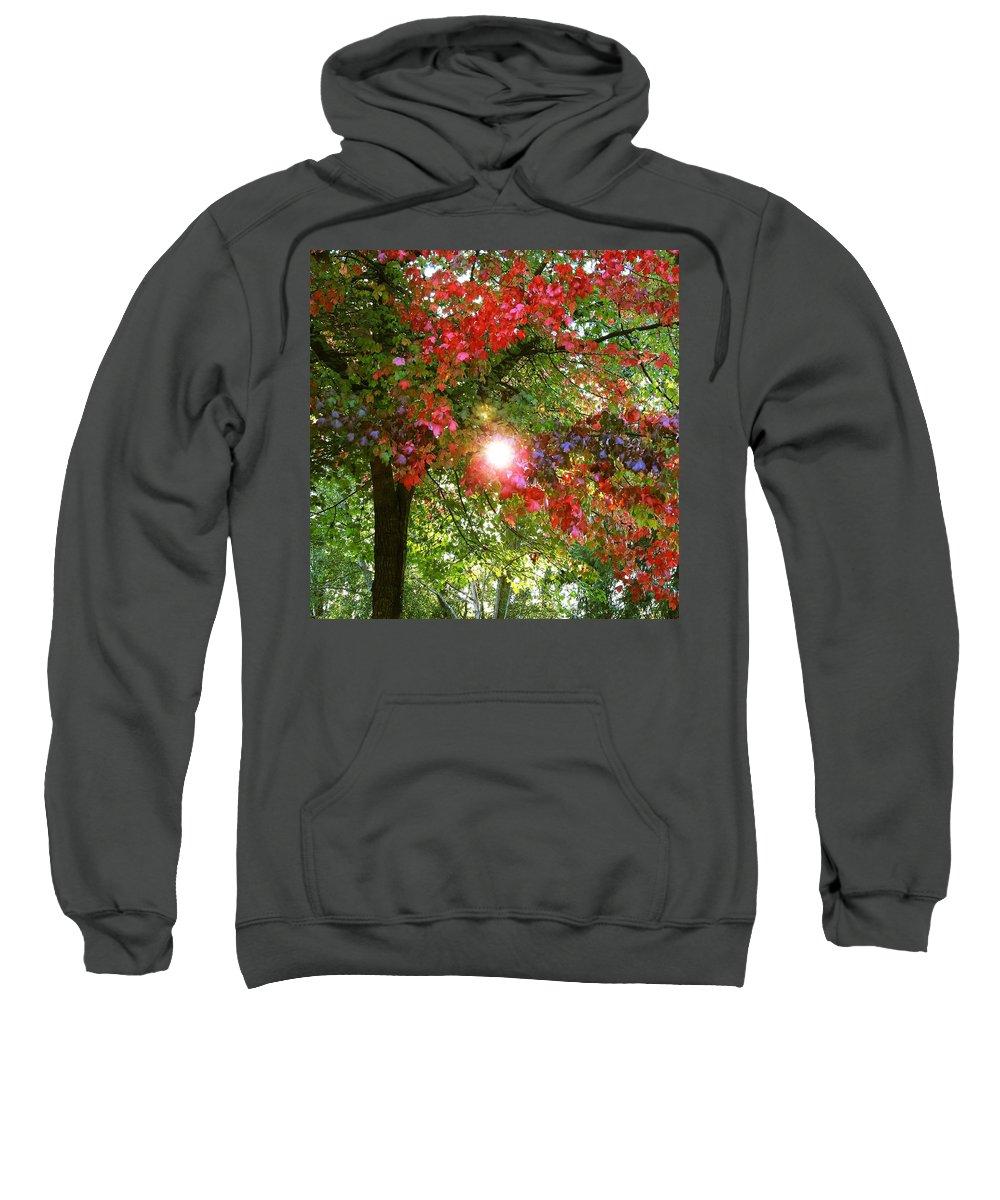 Autumn Sweatshirt featuring the photograph Autumn Sun by Sandra Peery