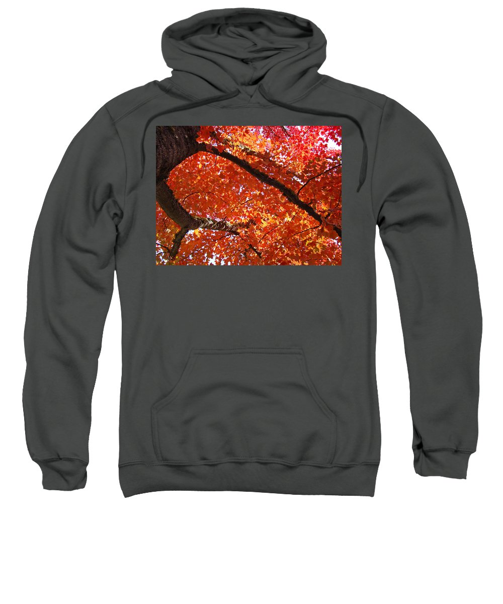 Nature Sweatshirt featuring the photograph Autumn Tree Art Prints Orange Red Leaves Baslee Troutman by Baslee Troutman