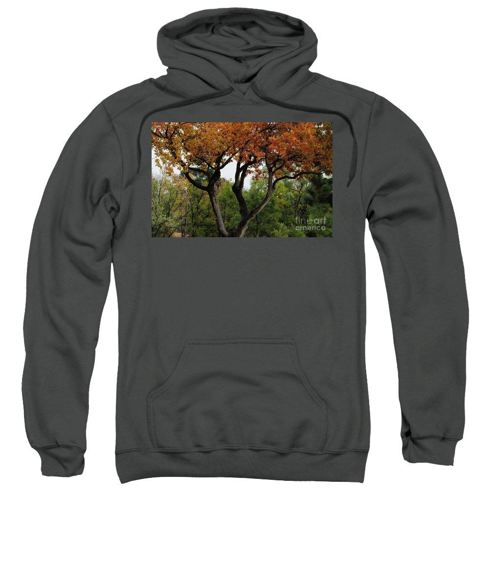 Autumn Sweatshirt featuring the photograph Autumn Tree II by Merrimon Crawford