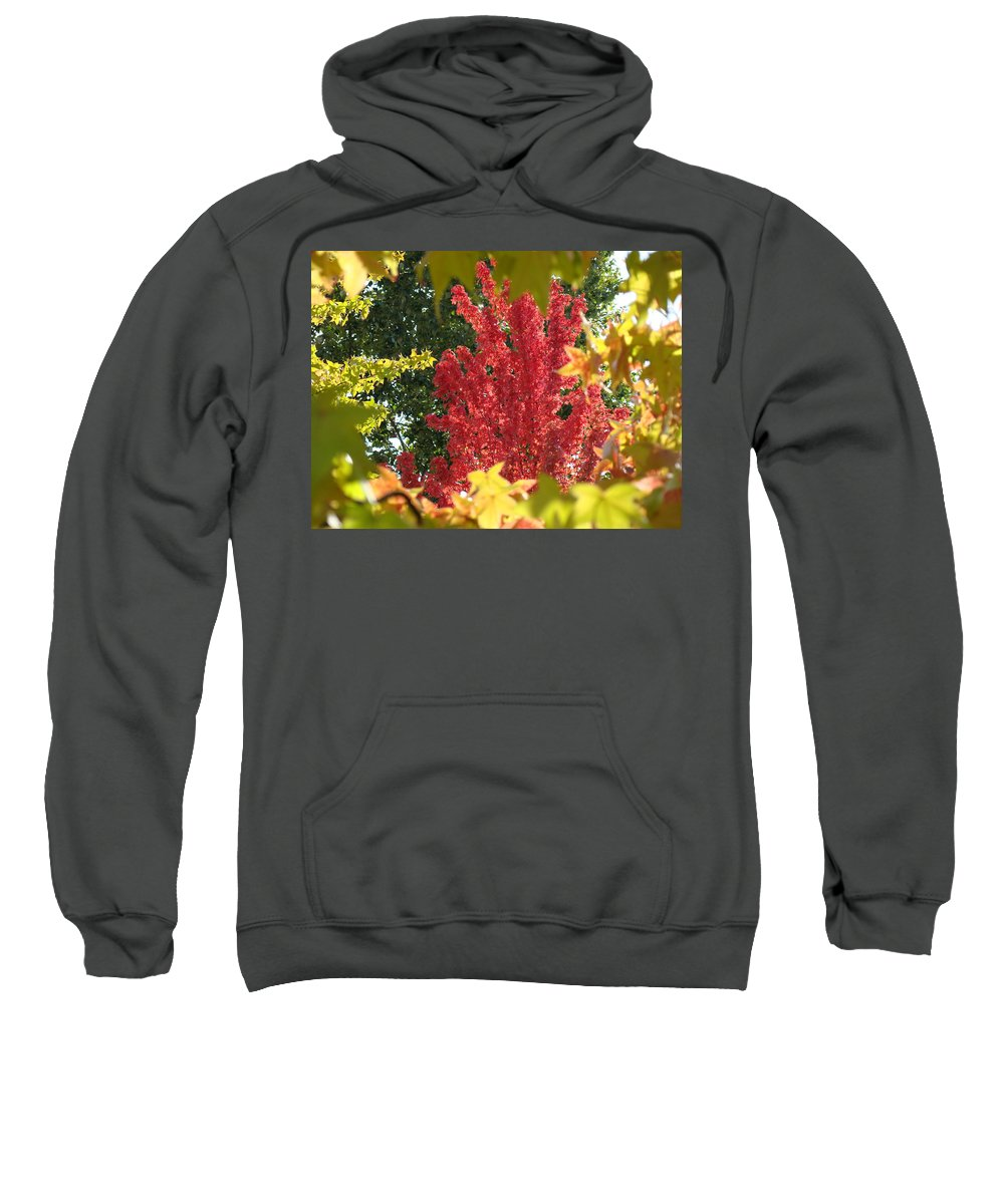 Autumn Sweatshirt featuring the photograph Autumn Trees Landscape Art Prints Canvas Fall Leaves Baslee Troutman by Baslee Troutman