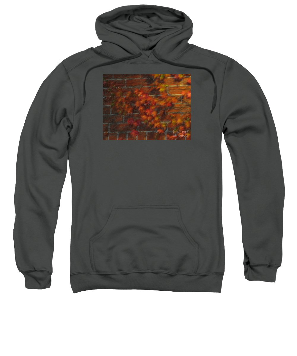 Leaves Sweatshirt featuring the photograph Autumn Vines by Cassandra Geernaert