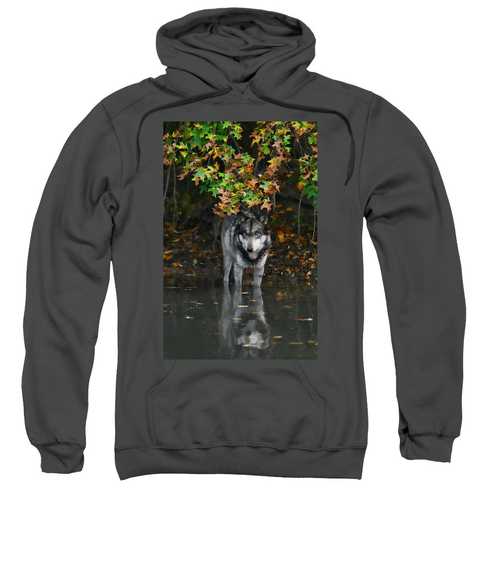 Wolf Wolves Lupine Canis Lupus Wildlife Animal Photography Photograph Sweatshirt featuring the photograph Autumn Wolf by Shari Jardina