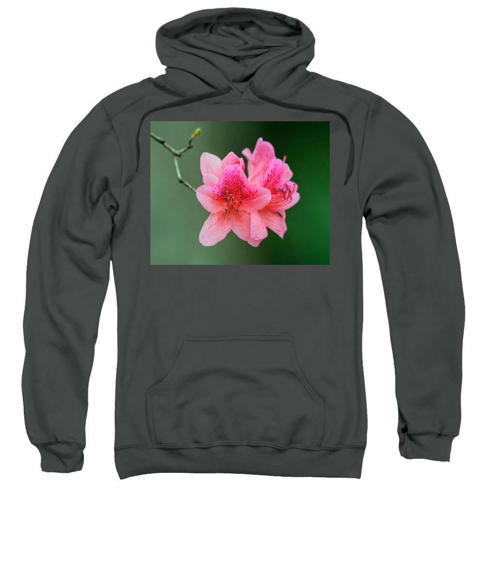 Angiosperms Sweatshirt featuring the photograph Azalea Blooms On A Green Background by Steve Samples