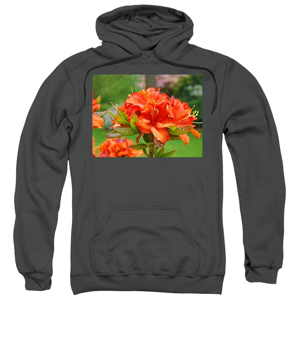 �azaleas Artwork� Sweatshirt featuring the photograph Azaleas Art Home Decor 14 Orange Azalea Flowers Art Prints Greeting Cards by Baslee Troutman