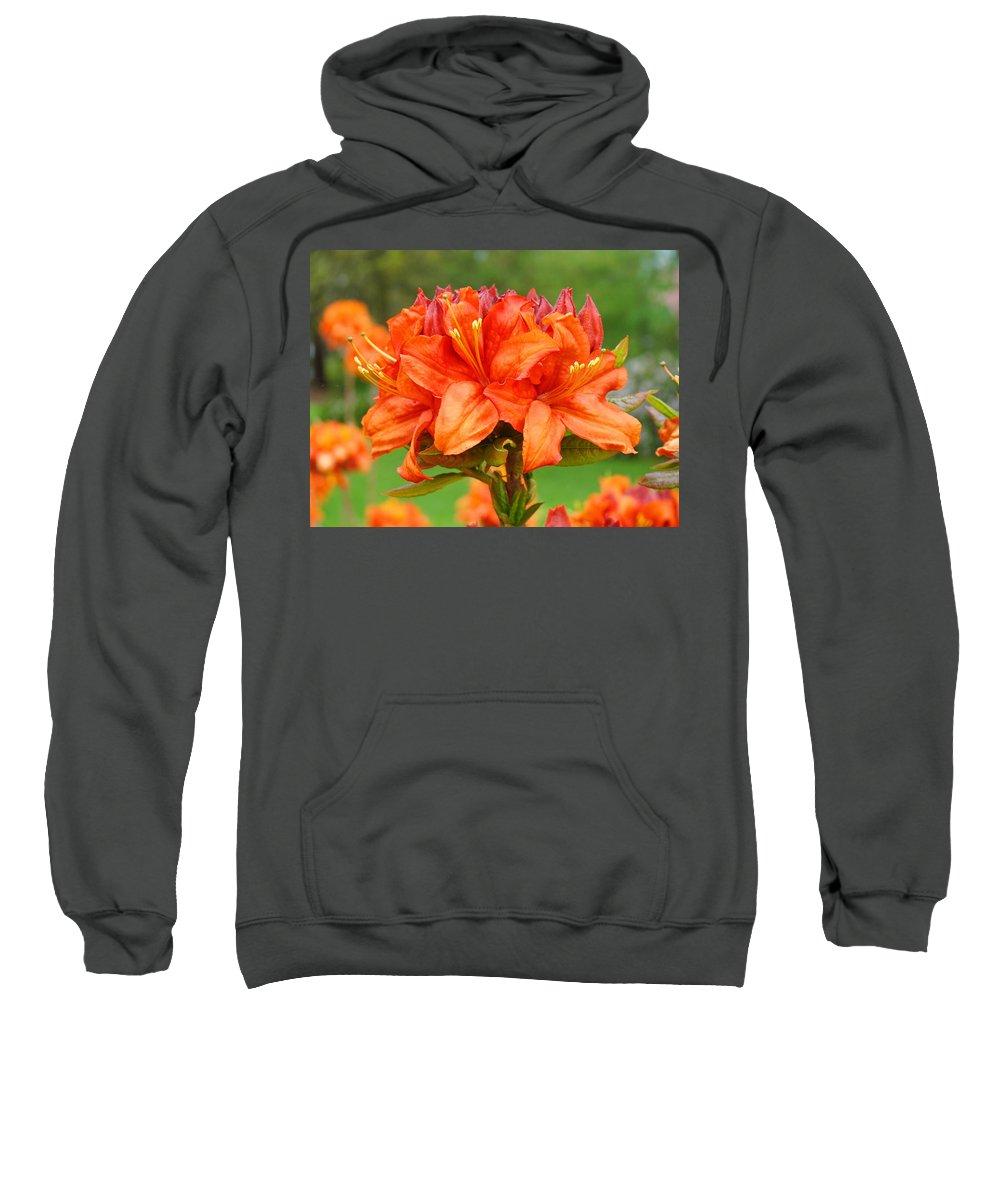 �azaleas Artwork� Sweatshirt featuring the photograph Azaleas Orange Red Azalea Flowers 11 Botanical Giclee Art Baslee Troutman by Baslee Troutman