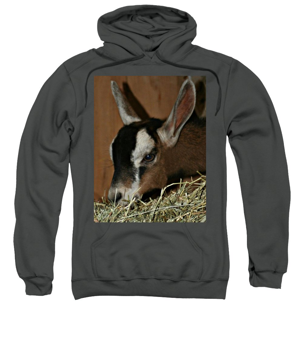 Animal Sweatshirt featuring the photograph Baby Girl by Barbara S Nickerson
