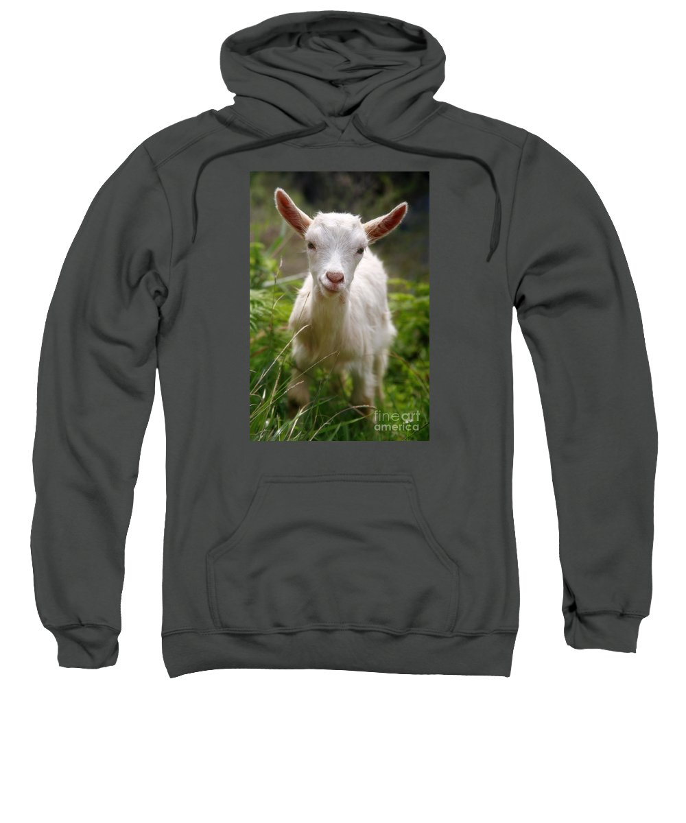 Animals Sweatshirt featuring the photograph Baby Goat by Gaspar Avila