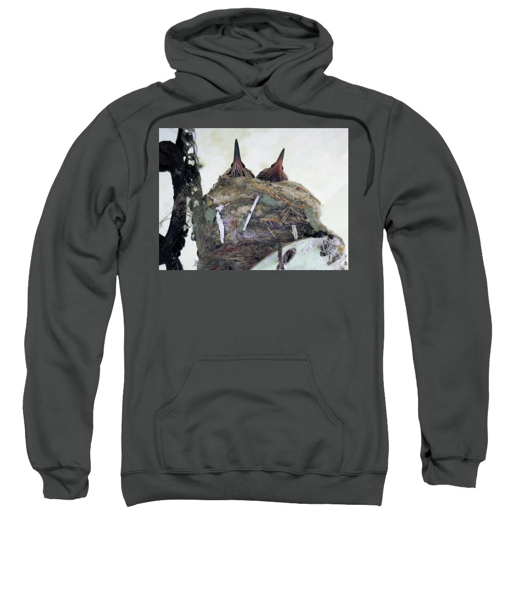 Hummingbirds Sweatshirt featuring the photograph Baby Hummers 4 by Helaine Cummins