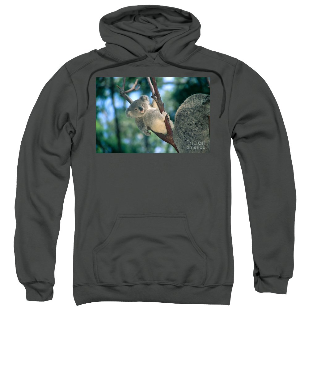 Animal Art Sweatshirt featuring the photograph Baby Koala Bear by Himani - Printscapes
