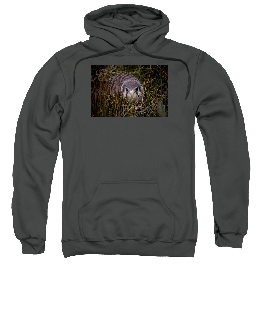 Sweatshirt featuring the photograph Baby Sage Grouse 2 by Reed Tim