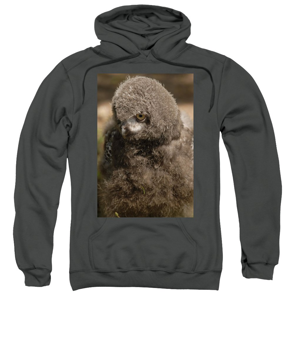 Snowy Owl Baby Sweatshirt featuring the photograph Baby Snowy Owl by JT Lewis