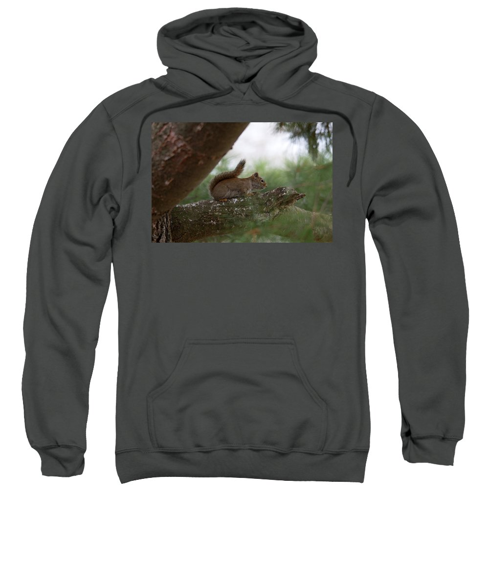 Nature Sweatshirt featuring the photograph Baby Squirrel by Linda Kerkau