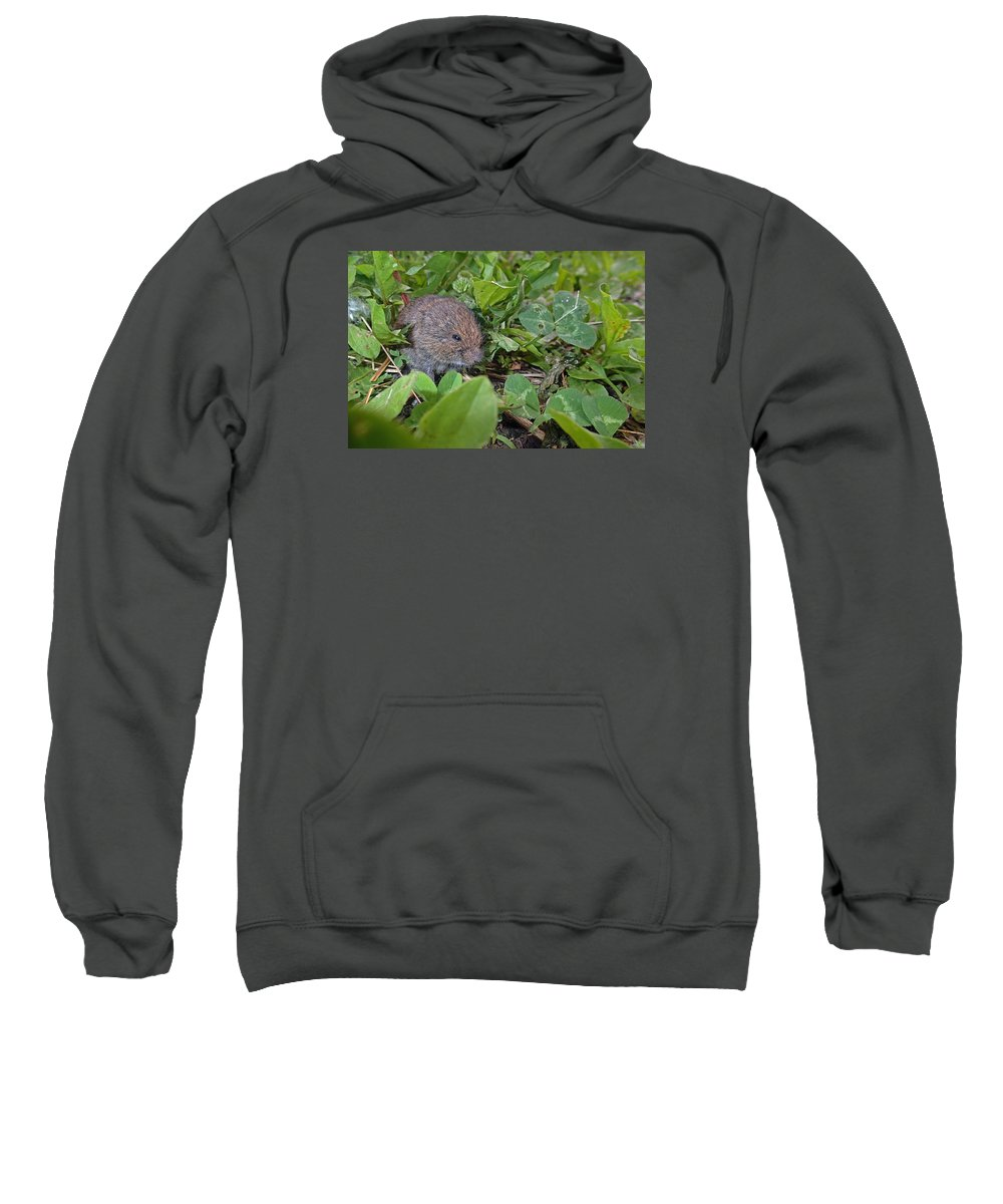 Meadow Vole Sweatshirt featuring the photograph Baby Vole by Asbed Iskedjian