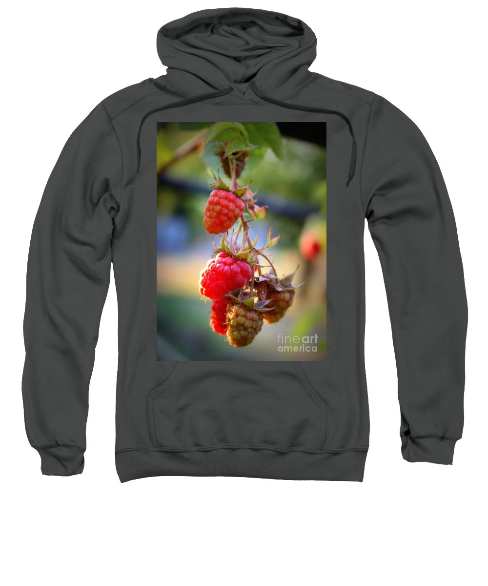 Food And Beverage Sweatshirt featuring the photograph Backyard Garden Series - The Freshest Raspberries by Carol Groenen
