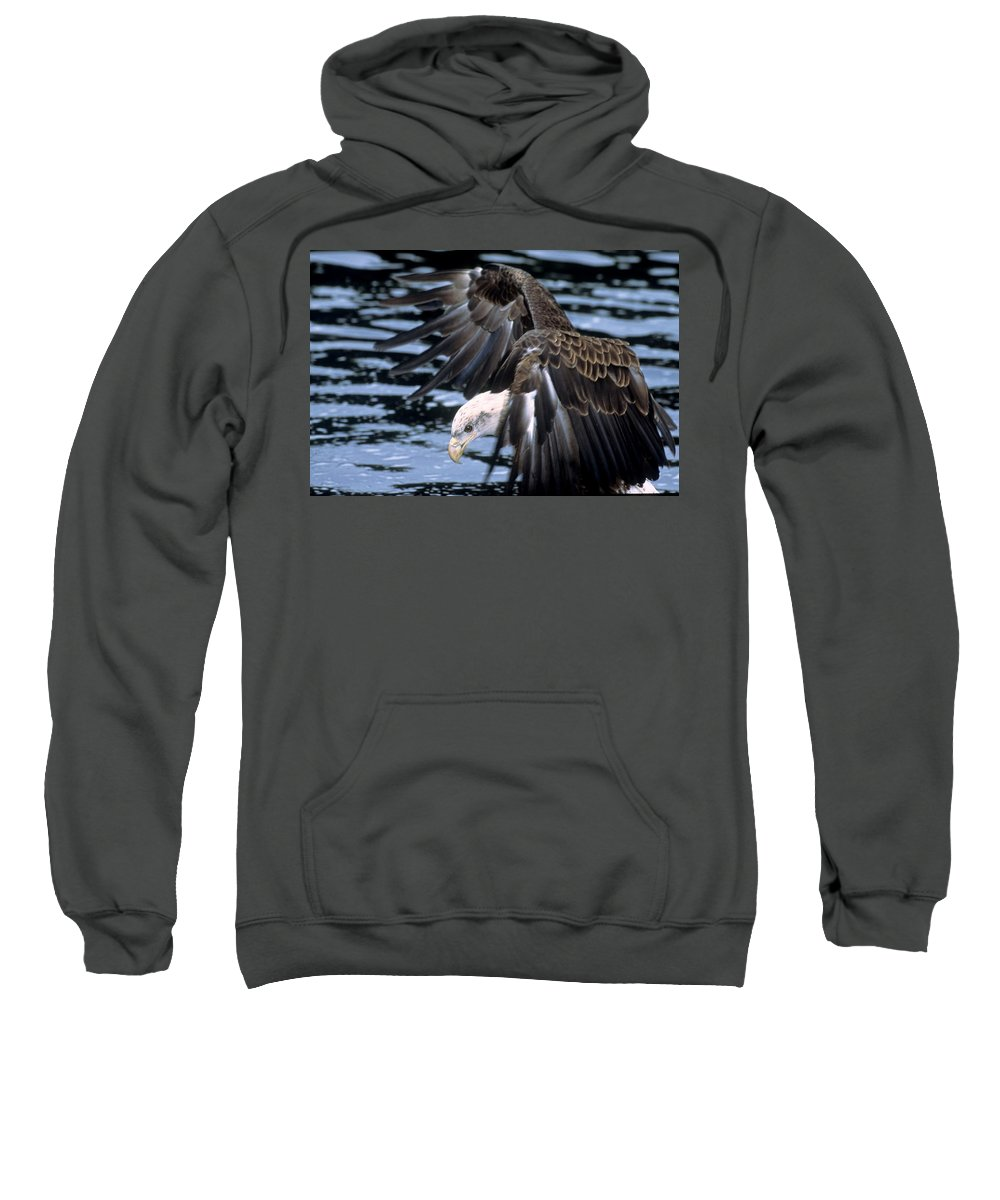 Wildlife Sweatshirt featuring the photograph Bald Eagle Strikes by Larry Allan