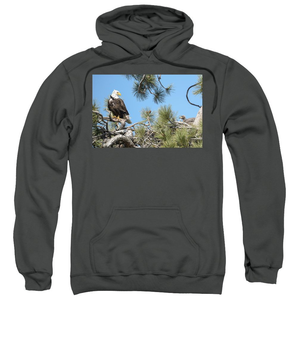 Bald Eagle Sweatshirt featuring the photograph Bald Eagle With Nestling by Richard Eastman