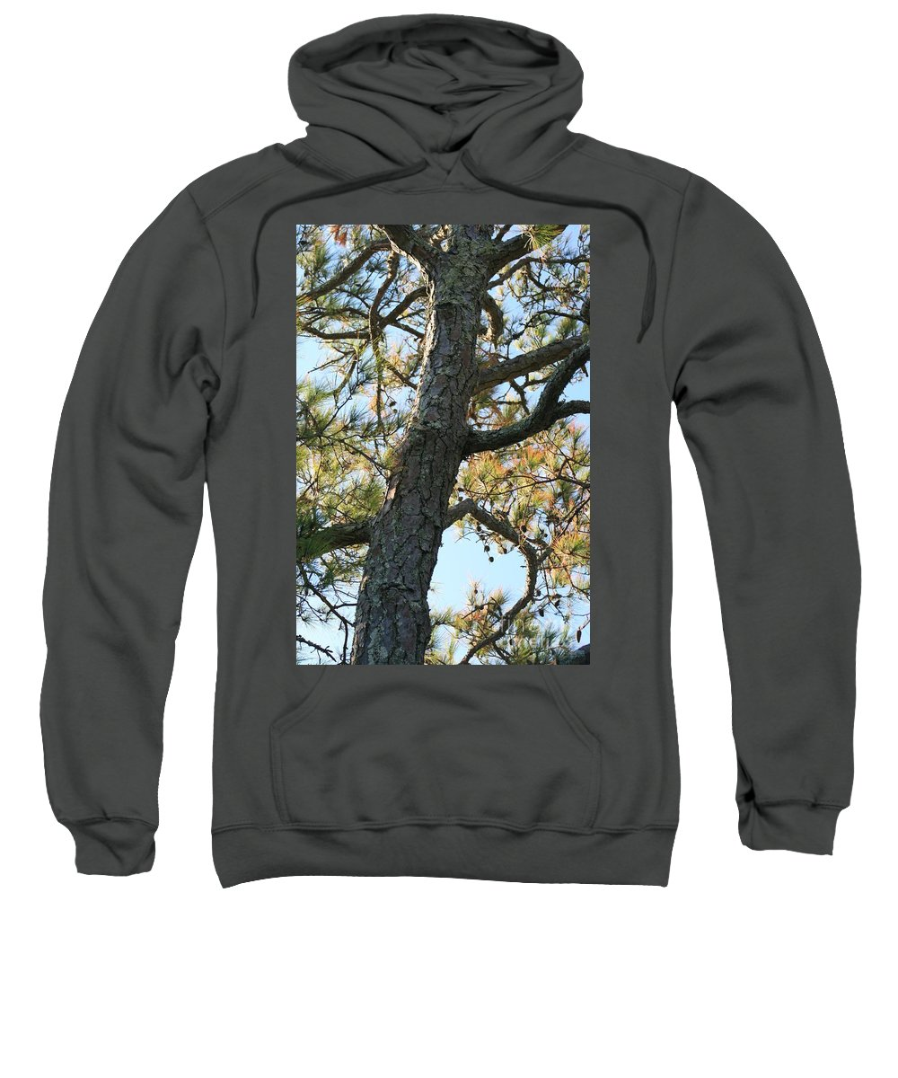 Tree Sweatshirt featuring the photograph Bald Head Tree by Nadine Rippelmeyer