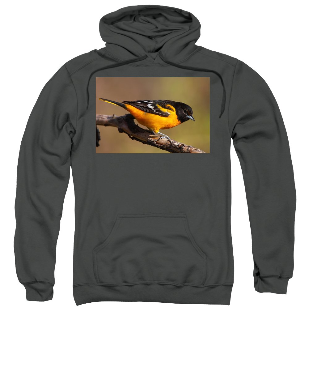 Baltimore Sweatshirt featuring the photograph Baltimore Oriole by Bruce J Robinson