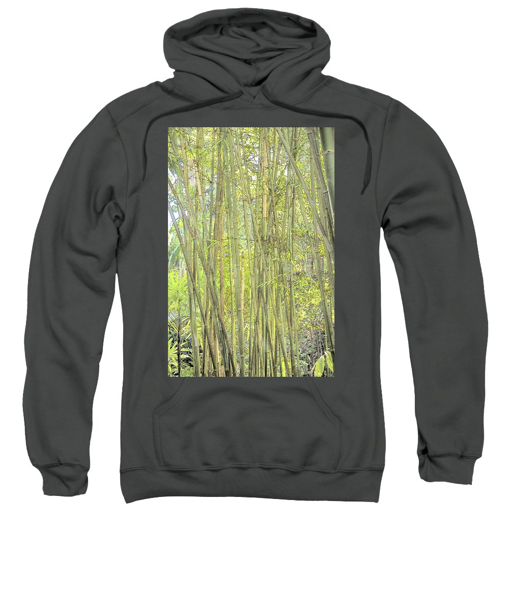 Bamboo Sweatshirt featuring the photograph Bamboo In San Diego Zoo by Kenneth Roberts